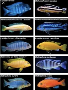 Looking for unwanted cichlids