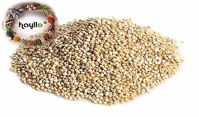 Hayllo Natural Whole Grain White Royal Quinoa In Resealable Bag  1 Pound