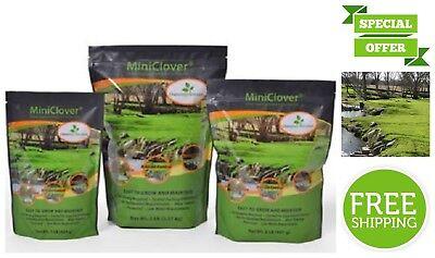 White Perennial Miniclover Seeds Mix Garden Lawn 0.25 LB Natural Fertilizer