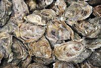 Fall oyster lisence
