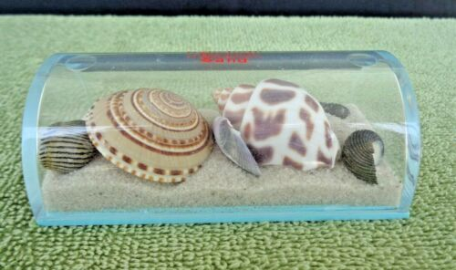 Older Rehoboth Beach Sand and Shells in Plastic Dome Container Souvenir