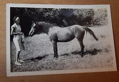 Photograph Social History Lady Feeding Her Horse Vintage Fashions  1960's