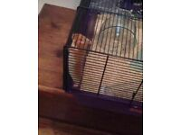 I am looking for a new homeboy for my hamster for £5.00 (cage and accessories not included)
