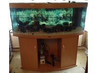 5ft Bow Fish Tank with cabinet never used