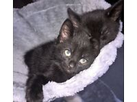 Lovely 8 week old boy looking for a good home