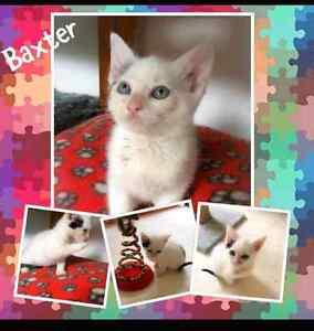 Kittens/Cats Brassall Ipswich City Preview