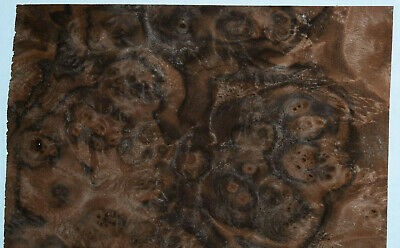 Walnut Burl Raw Wood Veneer Sheets 7.5 X 14 Inches 142nd Thick  8631-6
