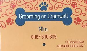 Small Dog Grooming Alexander Heights Wanneroo Area Preview