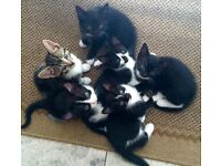 Six super-playful kittens for sale