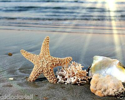 Seashells / Sea Shell - Ocean 8 x 10 GLOSSY Photo Picture IMAGE #7