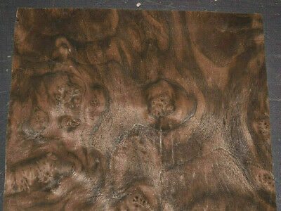 Walnut Burl Raw Wood Veneer Sheets 11 X 15.5 Inches 142nd Thick  7651-45