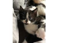 One male kitten left!