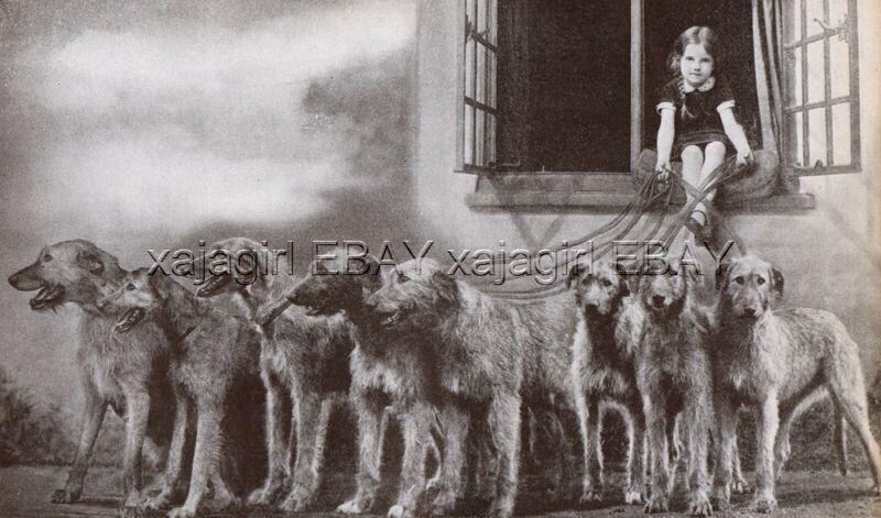 DOG Irish Wolfhound Little Girl Holds Onto 8! Barr Kennel, Vintage Print 1930s