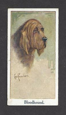 Rare 1924 UK Leo Chambers Dog Art Head Study Moustafa Cigarette Card BLOODHOUND
