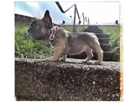 Kc registered French Bulldog Puppies 2 beautiful girls left