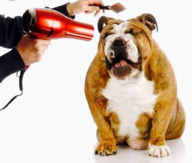 Wanted: Experienced Dog Groomer-The Gap