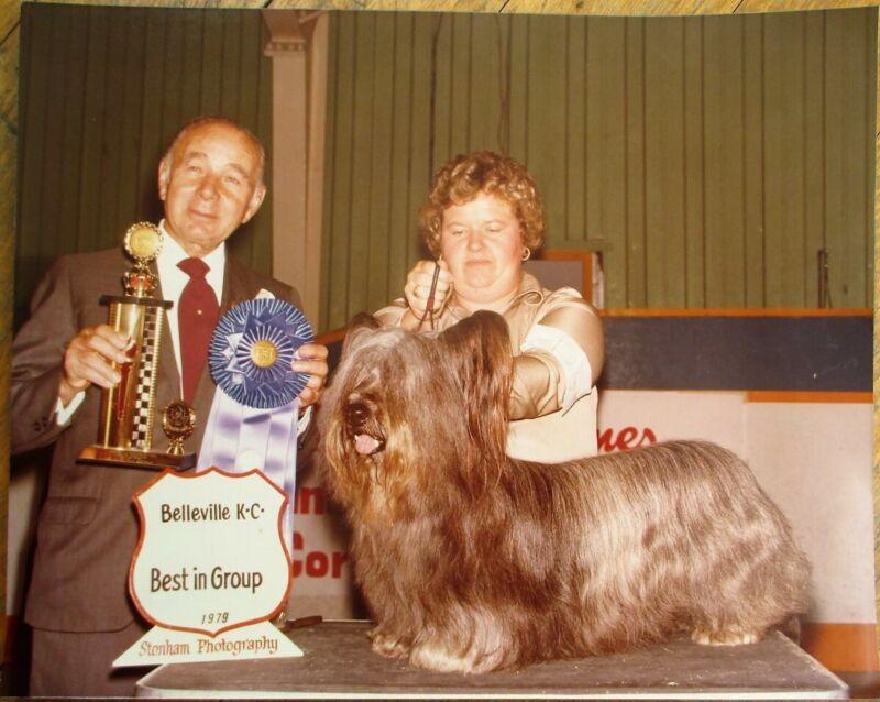 Skye Terrier 1979 Champion Dog Show 8 x 10 Photograph / Photo