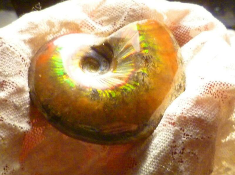 """2.2""""  A+ Red Color Change To Green AMMOLITE Polished AMMONITE FOSSIL 224cts 54mm"""