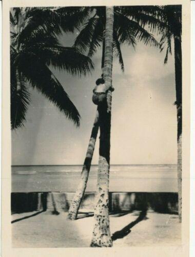 1930s Hawaiian Climbing Coconut Tree Waikiki Hawaii 5x7 Photo