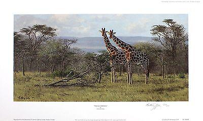 "ANTHONY GIBBS ""Two's Company"" giraffe africa SIGNED LTD SIZE:35cm x 59cm NEW"