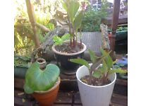 Plants Super Sale and some for free