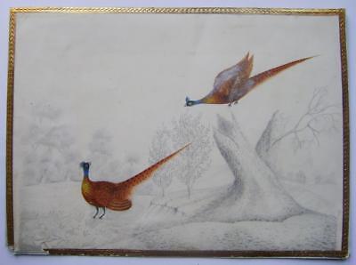 BIRDS TWO  PHEASANTS IN A LANDSCAPE ELIZABETH HENNAKER W/COL/PENCIL C1840