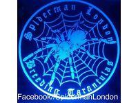 Tarantula , scorpions , vivarium, reptiles