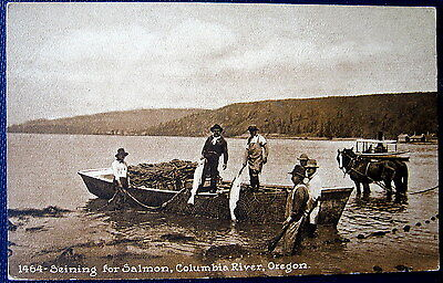 COLUMBIA RIVER Oregon ~1900's SEINING  FISHING FOR SALMON ~ HORSES ~ BOAT