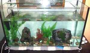 2ft Fish tank wanted! Salisbury North Salisbury Area Preview