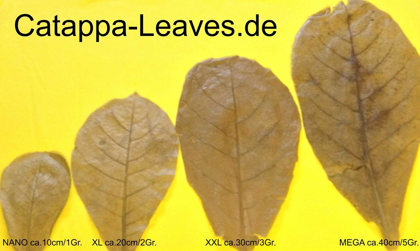 catappa-leaves
