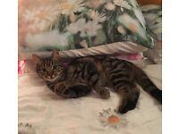 Cat lost Hartlepool
