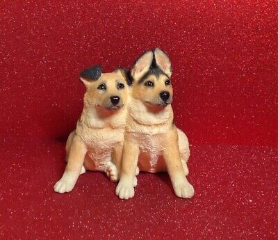 alsatian puppies for sale  Shipping to Nigeria