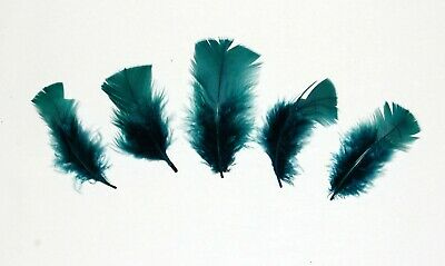 30 Pcs TURKEY PLUMAGE Feathers 2-5