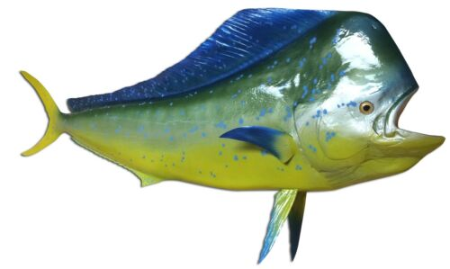 "72"" Bull Dolphin Half Fish Mount Replica (Mahi Mahi / Dorado)- 10 Day Production"