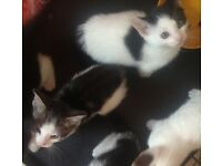 5 kittens READY NOW!!