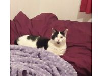MISSING CAT Hackenthorpe area