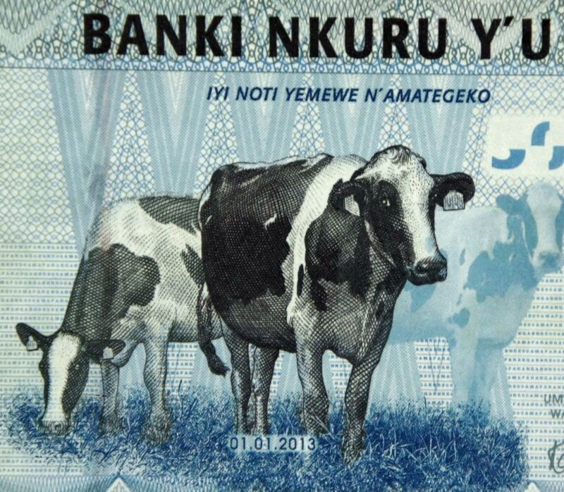 COWS on MONEY 2013  RWANDA 500 FRANCS BANKNOTE Authentic Uncirculated currency
