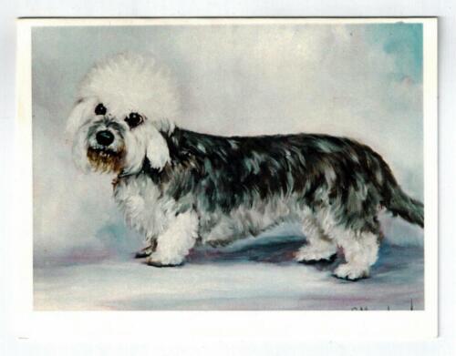 Black & White Dandie Dinmont Terrier Notecards Set 12 Note Cards Ruth Maystead