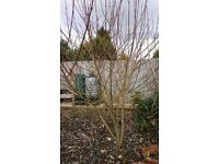 VARIOUS MATURE GARDEN PLANTS / FRUIT TREES