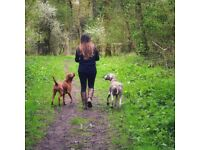 Maryann's Marvellous Muts offers a loving reliable dog walking/day care business