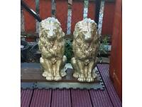 Stone gold lions