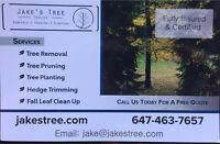 Affordable Professional Tree Service