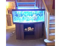 5ft Large Juwel Aquarium Fish Tank with stand and accessories