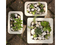 Handmade cement planters with succulent plants