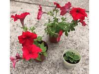 Bundle of garden flowers