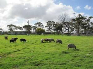 BUY  OUTRIGHT WIWO  *OR*  LEASE-BUY 100-ACRE-FARM
