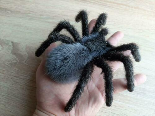 Animal Totem Realistic Spider Tarantula Amulet Spirit Animals Pagan Talisman