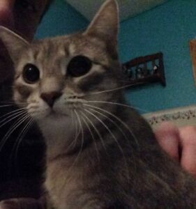 Free Cat / Kitten to a loving home