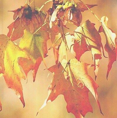 Kess InHouse Designs SET OF 8 Autumn Leaves Coasters, BEAUTIFUL & PRACTICAL