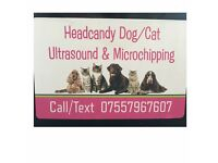 Dog/Cat pregnancy scanning and Microchipping